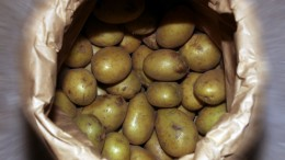 Potatoes on the way to the planet in March