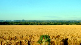 750,000 goal less cropland in 15 years