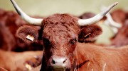 Meat imports doubled in one year