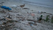 Many volunteers will clean beaches