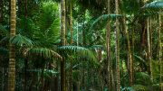 rain forest fund bio fuel climate gas