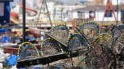 Lobster pots lobster fishery