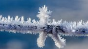 Frost Cold Winter