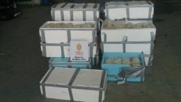 Fish Smuggling Seizure Customs