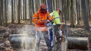 Forest workers