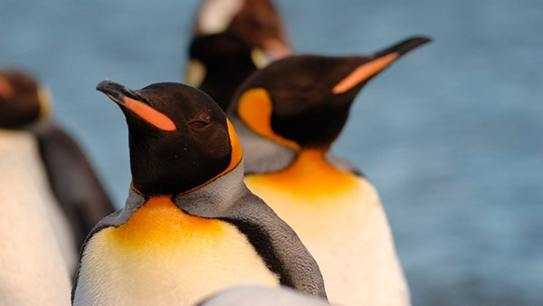 Penguin Antarctic Treaty