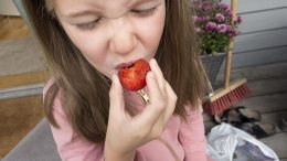 A girl eats strawberries