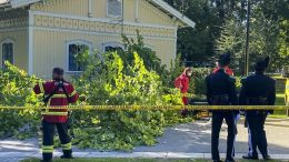 A person is said to have been injured when a tree fell in Slottsparken in Oslo.