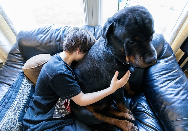 Boy enjoying a big dog.
