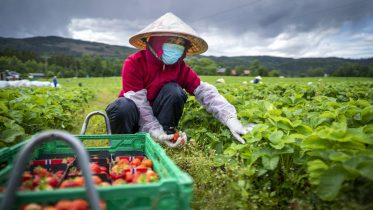 Seasonal worker from Vietnam in Norway