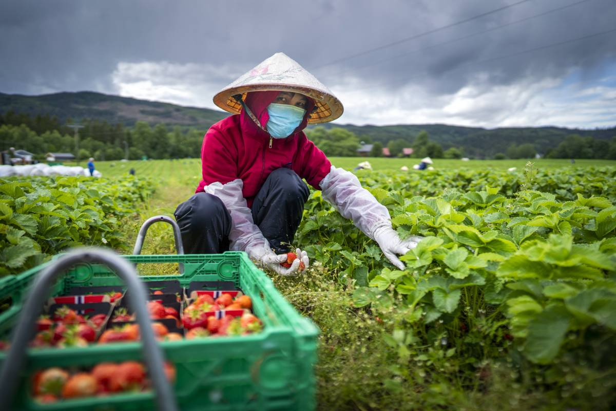 Norway wants to end work-related exploitation of seasonal workers in agriculture