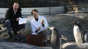 Penguins vaccinated